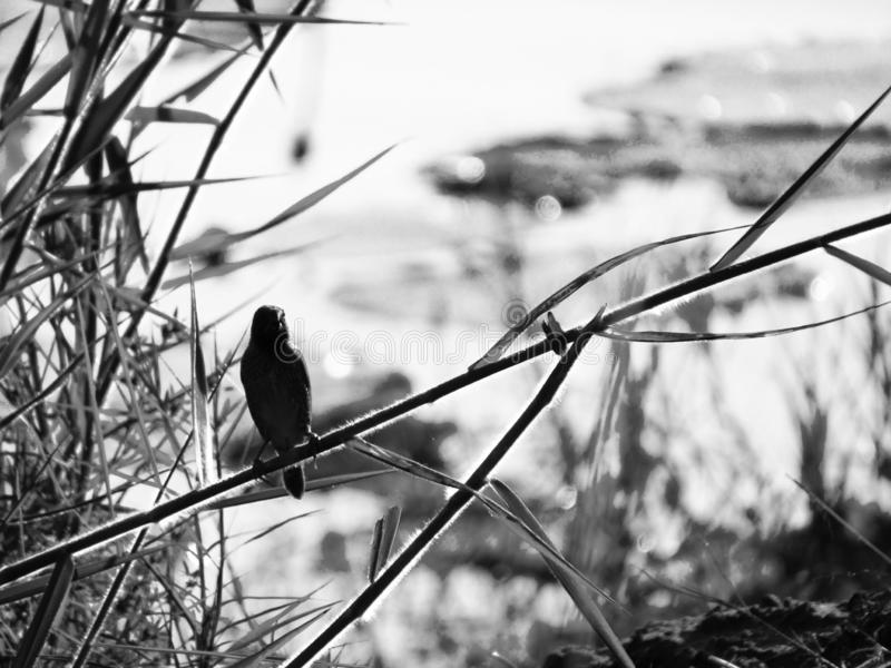 Маленькая птица стоковое изображение rf