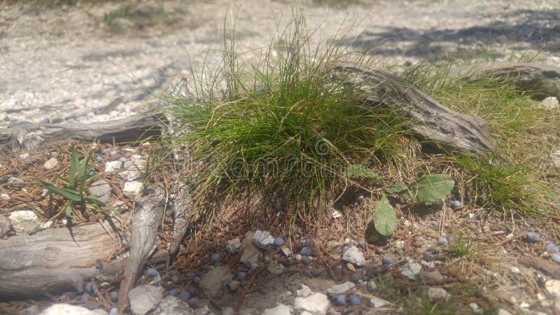 Маленькая трава заплаты o стоковое изображение
