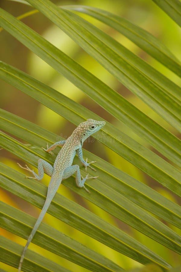 Маленькая ящерица на пальме стоковое изображение
