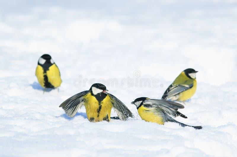 Маленькие красивые птицы ярких синиц летели к выигрышу ` s Нового Года стоковые изображения