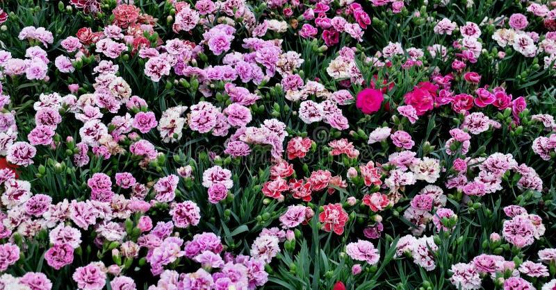 Маленькие красивые цветки других цветов закрывают вверх стоковое изображение
