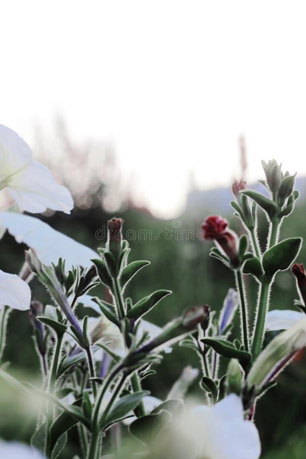 Маленькие простые wildflowers стоковая фотография rf