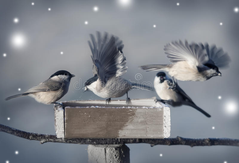 Маленькие птицы в зиме стоковые фото