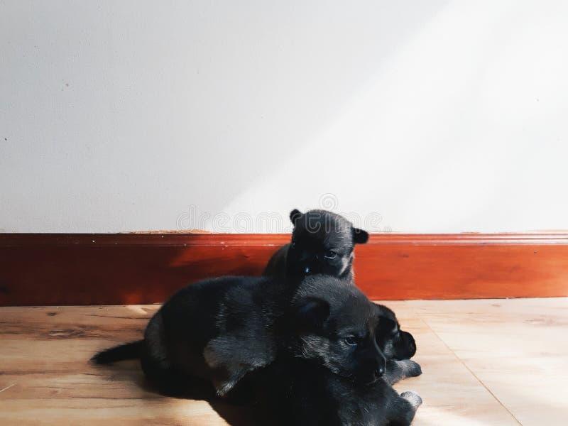 маленькие щенята очень милый стоковая фотография