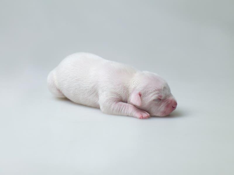 Маленькие щенята Стоковое фото RF