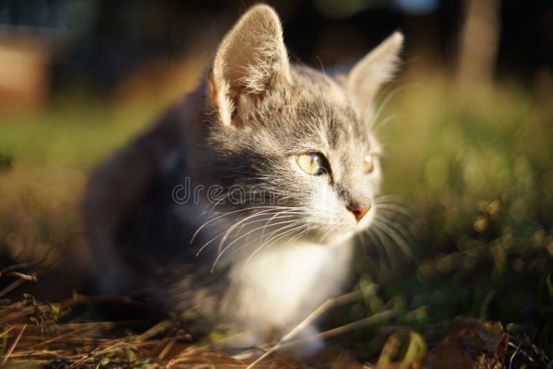 Малый котенок на траве стоковое фото. изображение ...