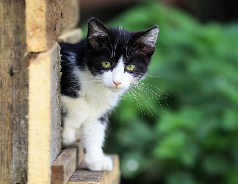 маленький вспугнутый котенок смотрит прищурясь из прятать на улице стоковое изображение rf