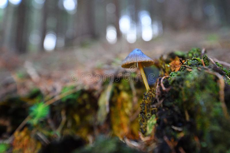 маленький гриб стоковые изображения