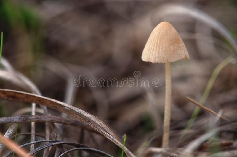 маленький гриб стоковые фото
