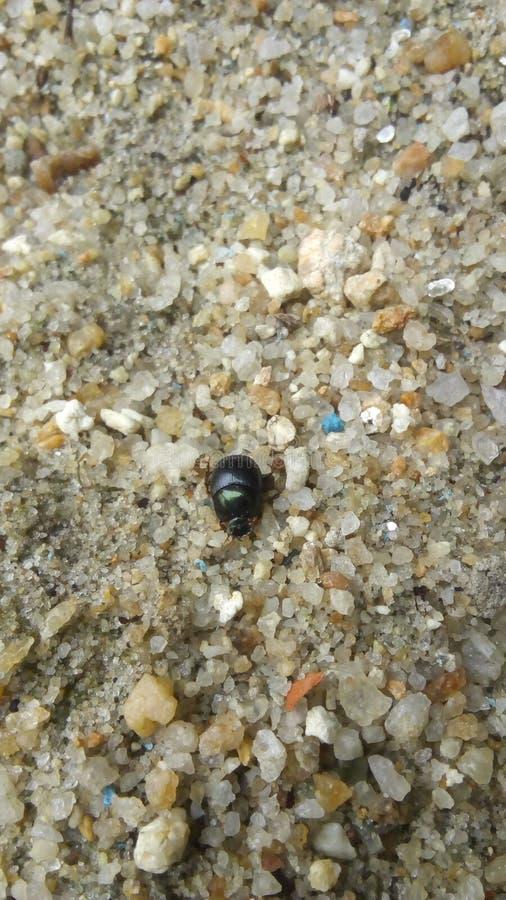Маленький жук стоковая фотография
