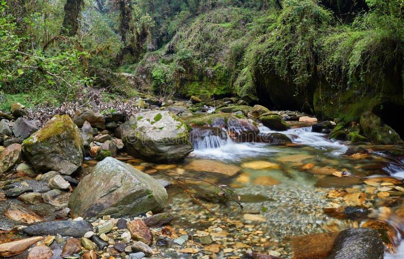 Маленький каскад на ручье в мрачных мох и пароме в камене, в мистическом лесу Непала стоковая фотография rf
