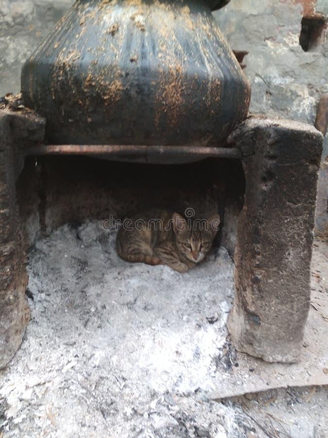 Маленький кот в batthi стоковые изображения