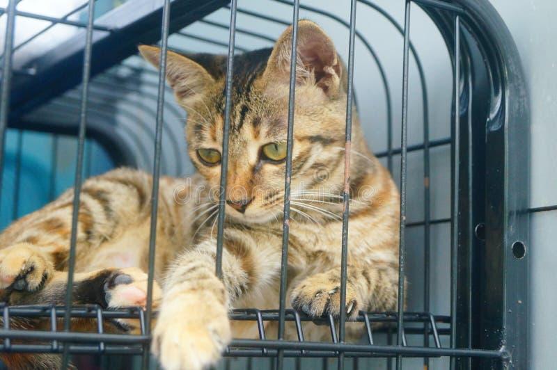 Маленький кот играет в клетке, очень милой стоковая фотография