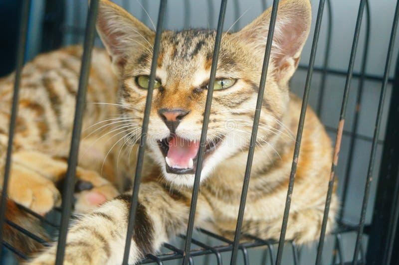 Маленький кот играет в клетке, очень милой стоковые фотографии rf