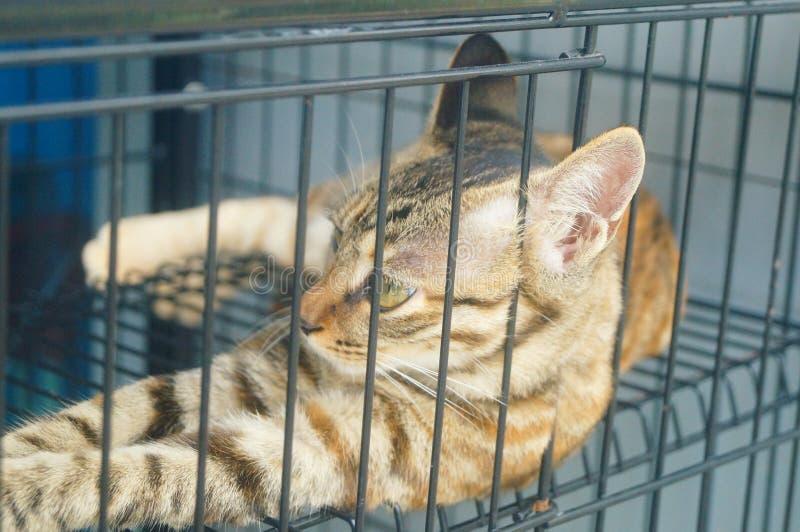 Маленький кот играет в клетке, очень милой стоковые фото