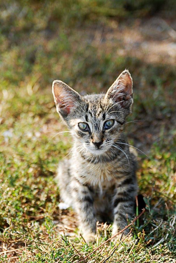 Маленький кот стоковое фото rf