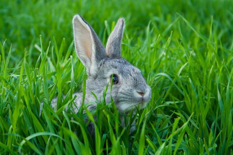 маленький кролик стоковые изображения rf