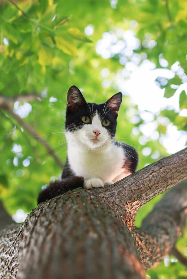 Маленький милый котенок сидя высоко на дереве и смотря вперед к стоковое изображение
