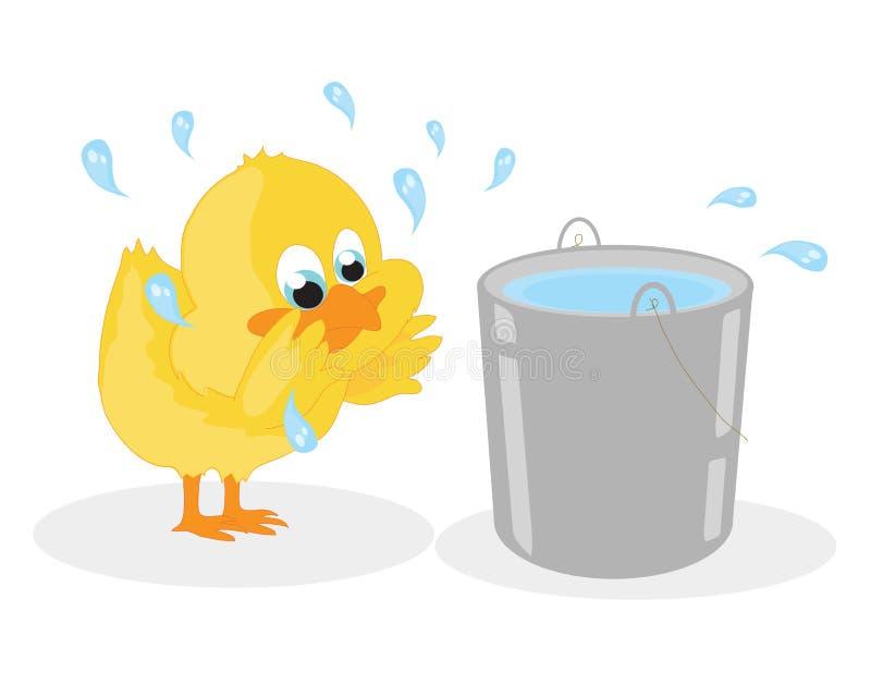 Маленький цыпленок моет от ведра бесплатная иллюстрация
