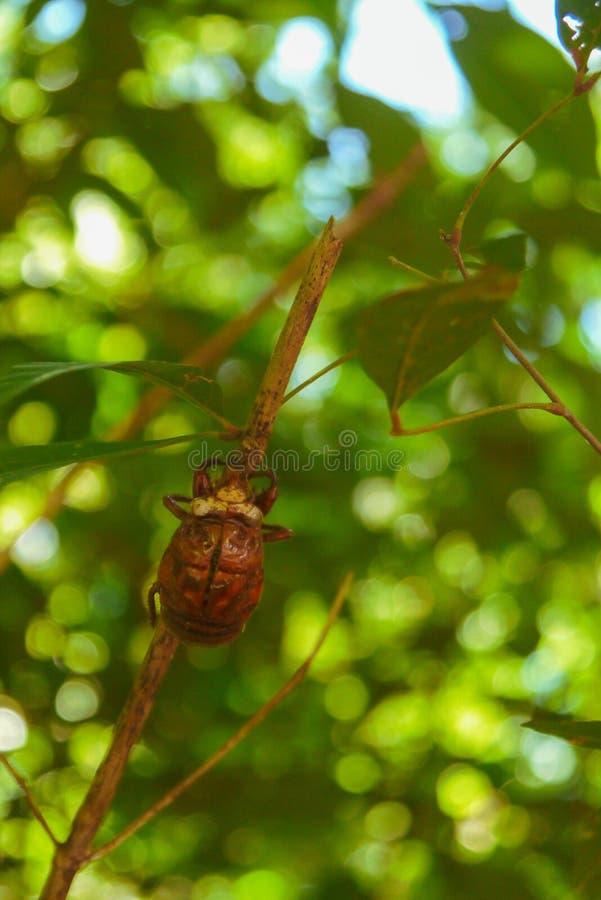 Маленькое насекомое взбираясь для того чтобы покрыть дерева стоковое изображение