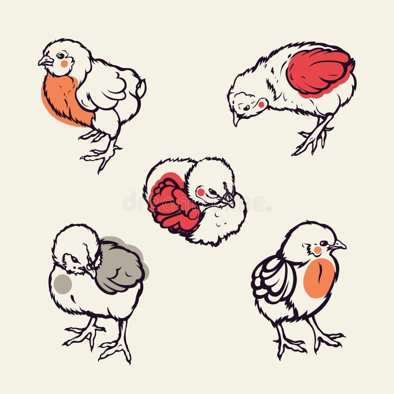 Маленькое повышение поголовья сельского хозяйства птицы цыпленка вычерченная рука иллюстрация вектора