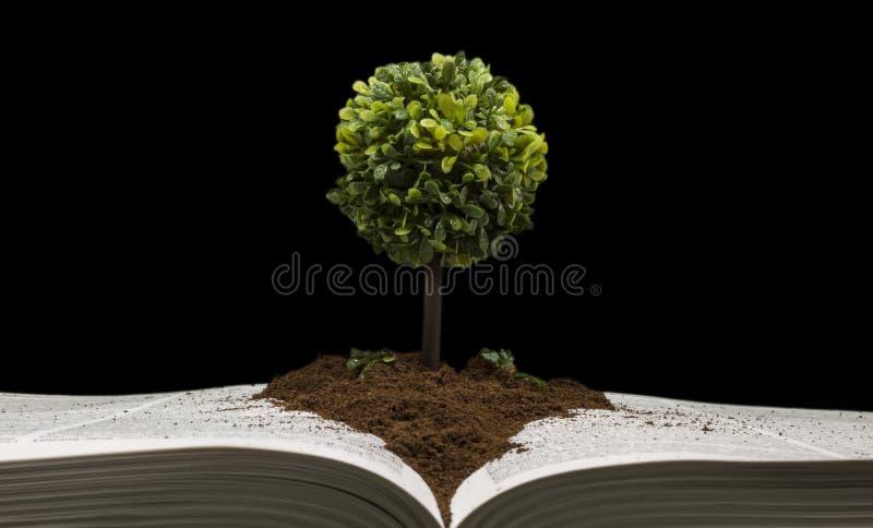 Малое дерево представляя знание и премудрость стоковые изображения