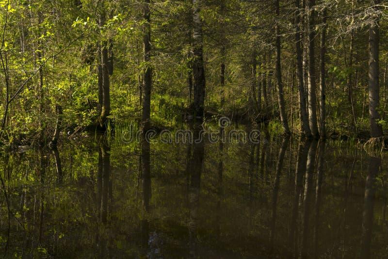 Малое озеро леса в тени деревьев стоковые фотографии rf