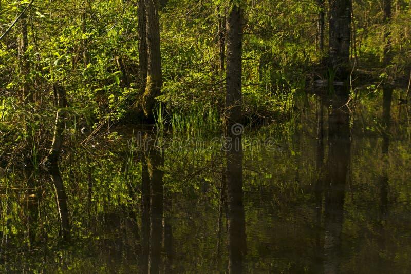 Малое озеро леса в тени деревьев стоковое изображение