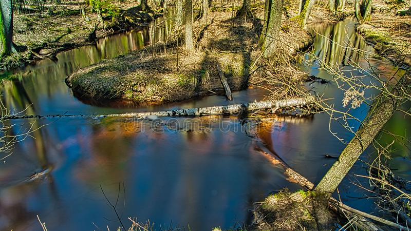 Малое река в древесине стоковое изображение rf