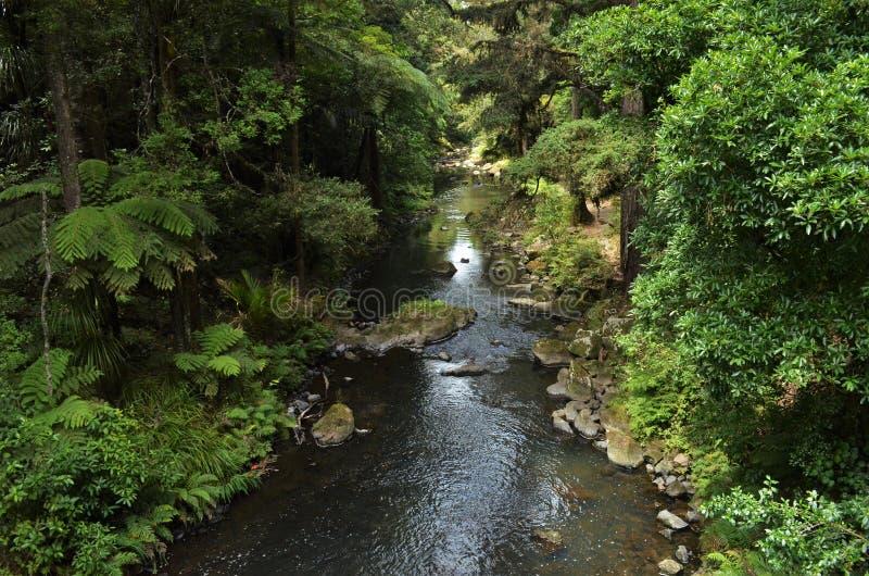 Малое река пропуская через живой зеленый лес с экзотическими заводами стоковое фото