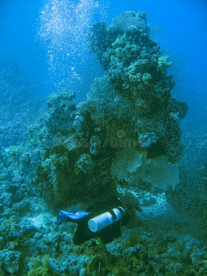 Малое тропическое мелководье рыб на мире коралловых рифов подводном стоковые фотографии rf
