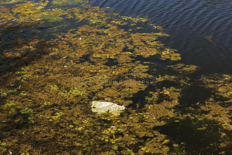 Малое умирая река было перерастано с заводами болота Загрязнение окружать колеблет, быстрый рост водорослей экологическая проблем стоковые изображения