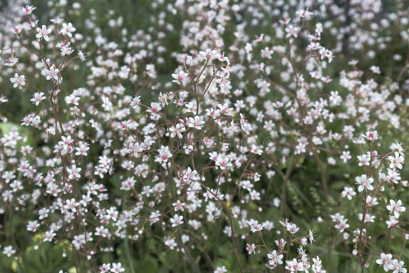 Малые белые цветки с яркой розовой серединой на motley запачкали предпосылку цветника стоковые изображения rf