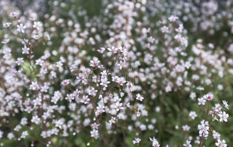 Малые белые цветки с яркой розовой серединой на motley запачкали предпосылку цветника стоковые изображения