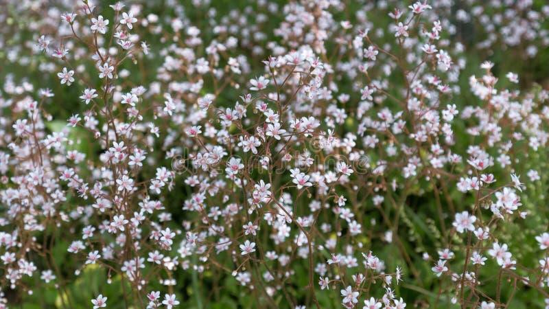 Малые белые цветки с яркой розовой серединой на motley запачкали предпосылку цветника стоковые фото