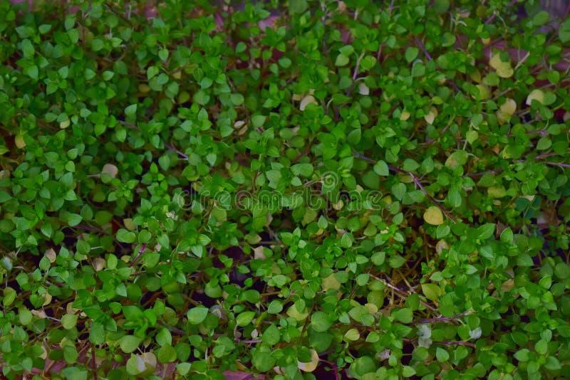 Малые зеленые листья травы покрывают землю с ковром стоковые фото