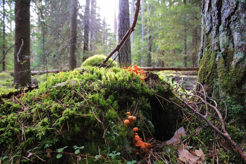 Малые красные грибы стоковая фотография rf