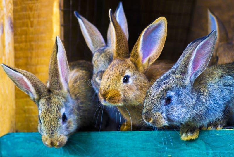 Малые кролики в клетке стоковые фотографии rf