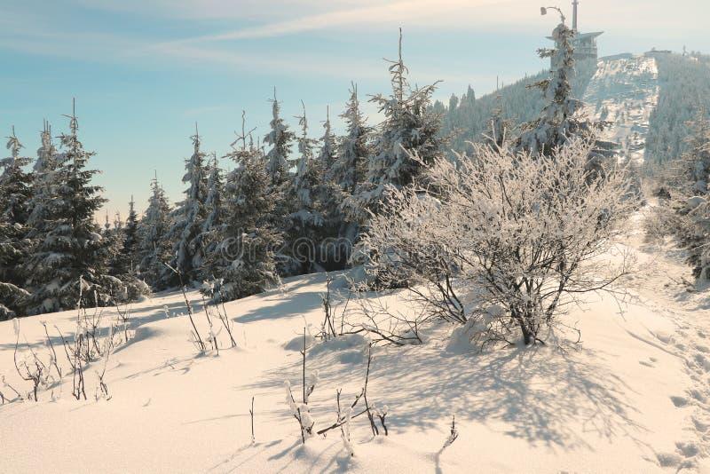 Малые лес и взгляд на строить hora Lysa стоковое фото