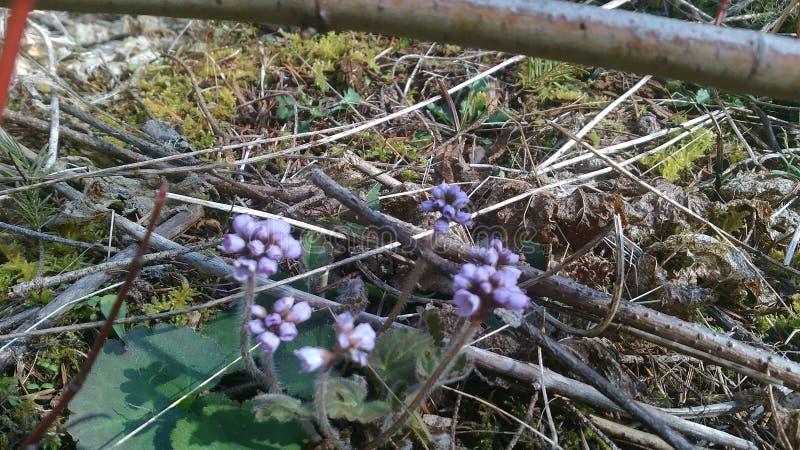 Малые цветки весны стоковые фотографии rf