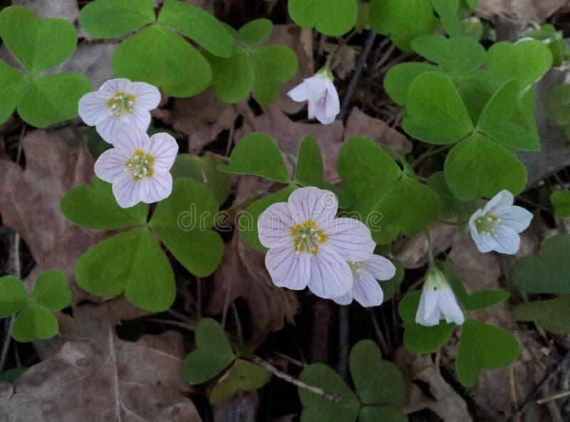Малые цветки леса стоковое фото rf