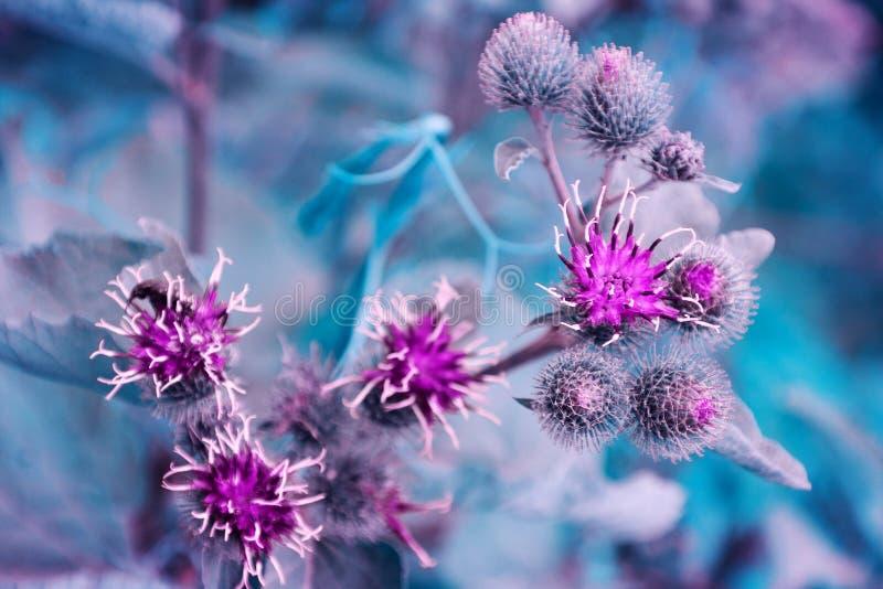 Малые цветя фиолетовые цветки в мягком фокусе стоковая фотография