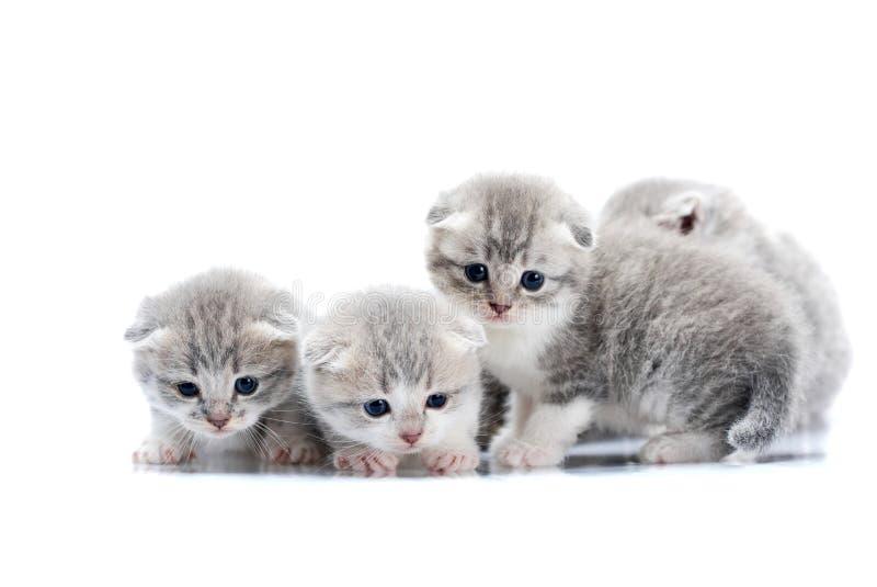 Малые newborn милые котята быть любознательный и тревоженый пока исследующ мир вокруг их на photoset в белой студии стоковые изображения