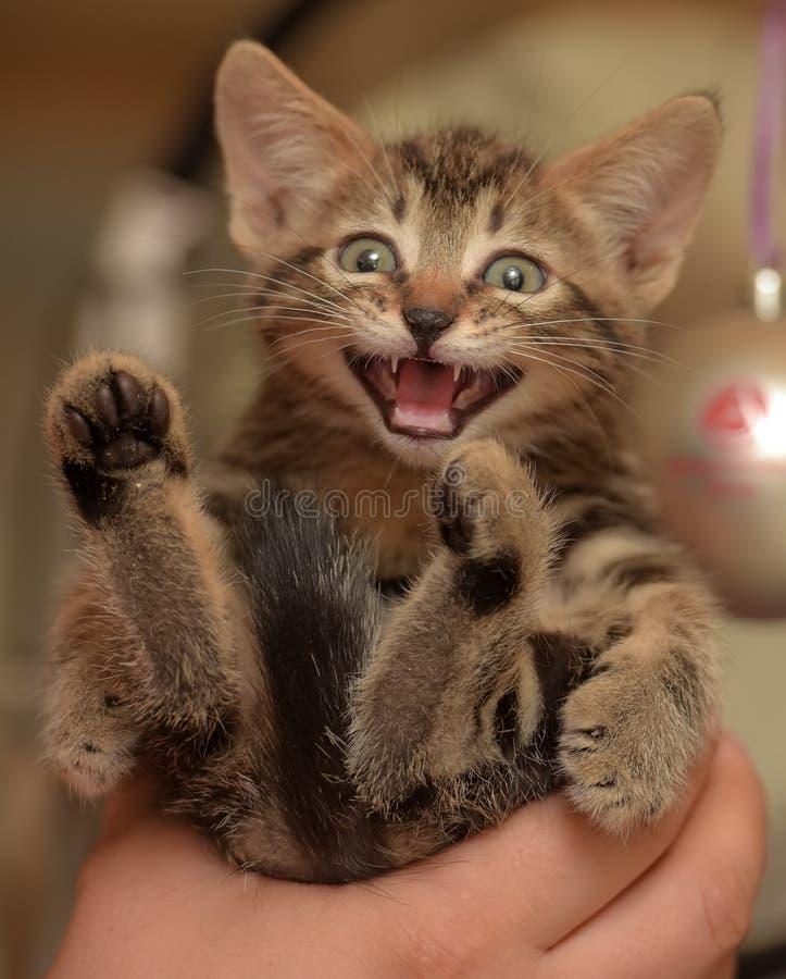 Малые striped meows котенка стоковая фотография rf