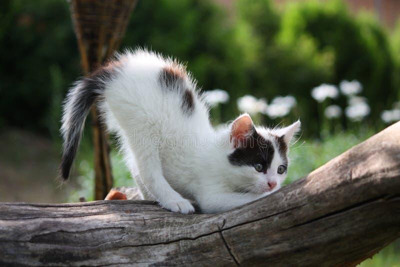 Малый белый котенок царапая ветвь дерева стоковые изображения