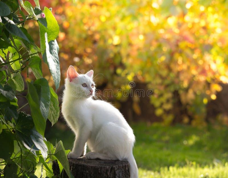 Малый белый кот в саде стоковое изображение