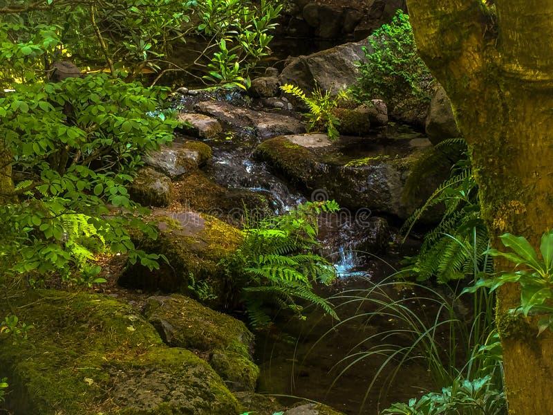 Малый водопад в природе стоковые изображения