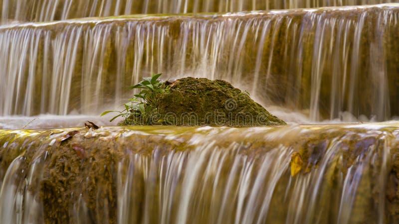 Малый завод над водопадом потока в тропических джунглях стоковые фото