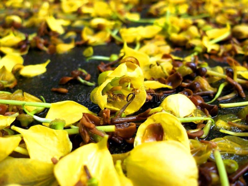 Малый зеленый мох обнимает большой утес стоковое изображение