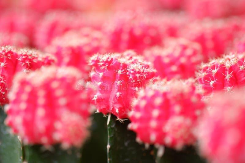 Малый кактус в баке для дома стоковая фотография rf